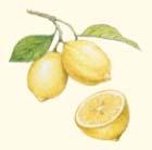 レモンの絵